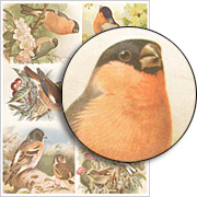 Finches Collage Sheet
