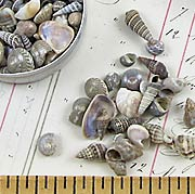 Tiny Real Seashells in Tin