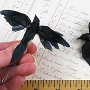 Small Feathered Crows